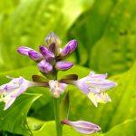 jardins-piniere-fleurs-ameres