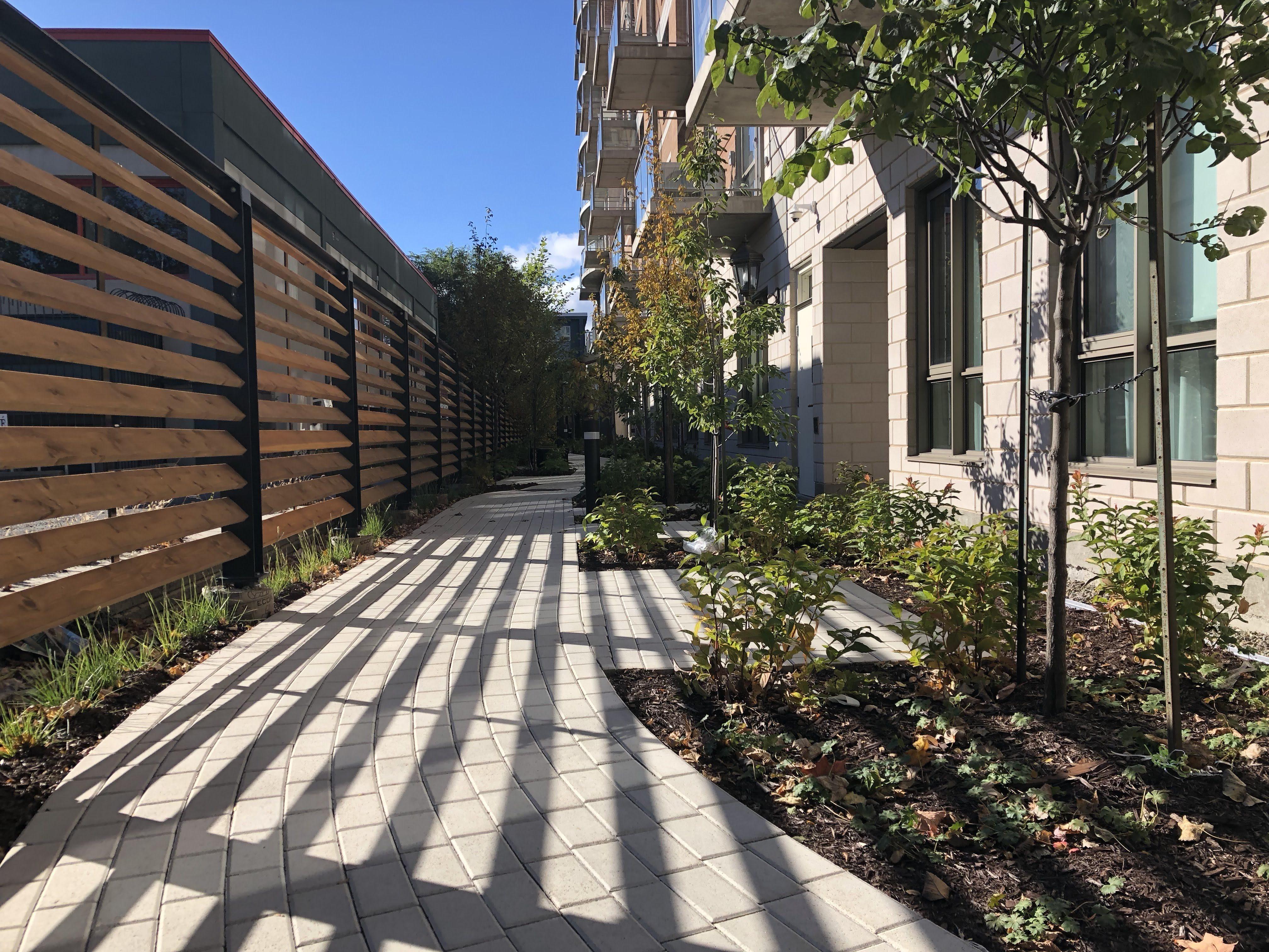 amenagement-paysager-residence-pour-aines-sentier-sinueux-en-pave-de-beton-plantation-d-arbres-a-petit-deployement-ecran-d-intimite