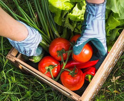 jardins-piniere-jardins-legumes